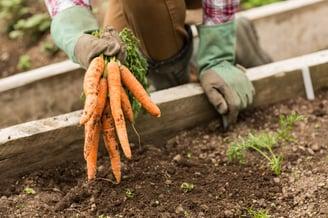 gardening work discipline